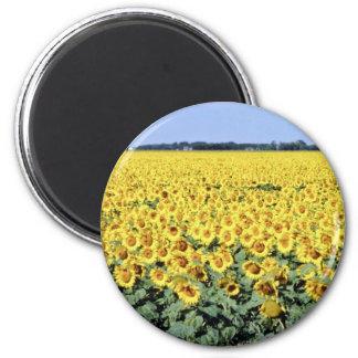 yellow Golden field of sunflowers, Manitoba flower Refrigerator Magnet