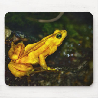 Yellow Golden Posion Frog Mouse Pad