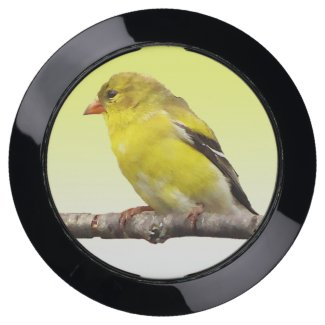 Yellow Goldfinch Bird USB Charging Station