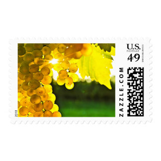 Yellow grapes postage