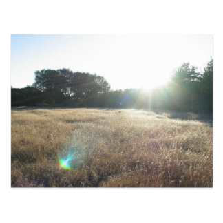 Yellow Grass At Andrew Molara Campground Postcards