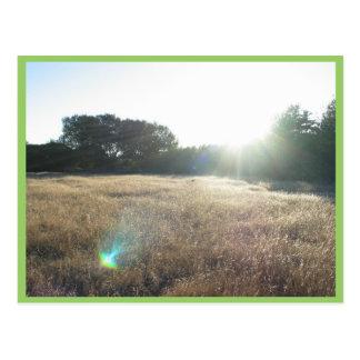 Yellow Grass At Andrew Molara Campground Postcard