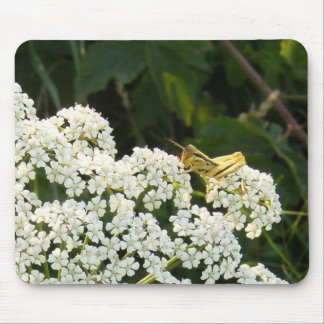 Yellow Grasshopper on a White Flower Mouse Pad