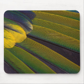 Yellow-Green Jenday Conure Feathers Mouse Pad