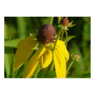 Yellow grey headed coneflower large business cards (Pack of 100)