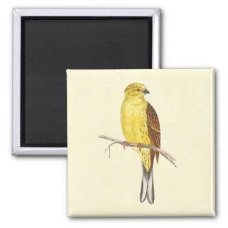 Yellow Hammer Bird Vintage Illustration Magnet