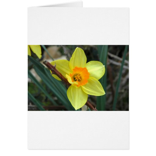 YELLOW HAS IT GREETING CARD