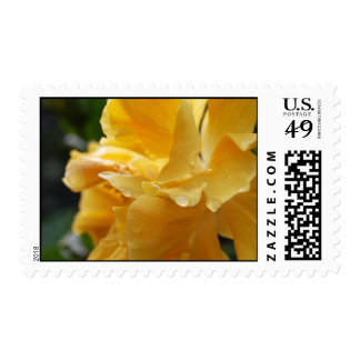 Yellow Hawaii Hibiscus (w/ a little dew) stamp