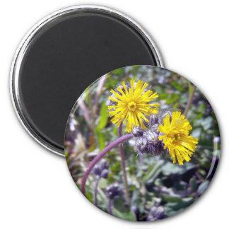 Yellow Hawkweed 1 Magnet