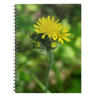Yellow Hawkweed Wildflower Notebook