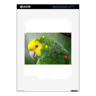 Yellow Headed Amazon iPad 3 Decal