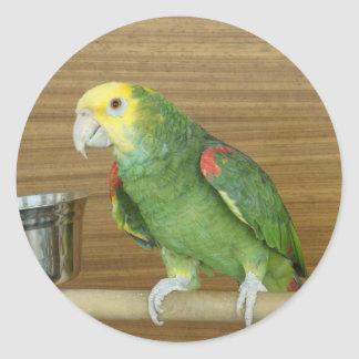 Yellow-Headed Amazon Parrot Classic Round Sticker