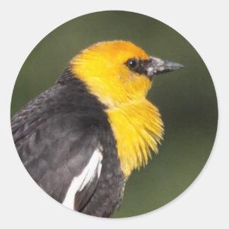 Yellow-Headed Blackbird in the Marsh Classic Round Sticker