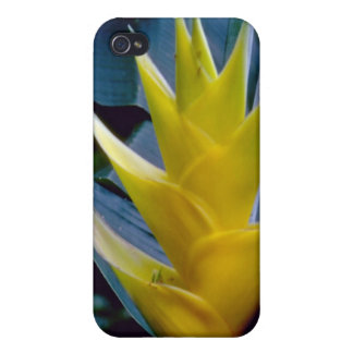 yellow Heliconia spp. flowers Covers For iPhone 4