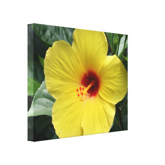 Yellow Hibiscus Stretched Canvas Prints