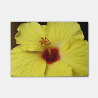 Yellow hibiscus Chinese rose flower in bloom Post-it Notes