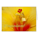 Yellow Hibiscus Congratulations Greeting Cards