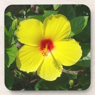 Yellow Hibiscus Cork Coaster