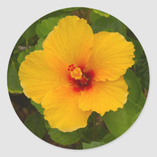 Yellow Hibiscus Flower Classic Round Sticker