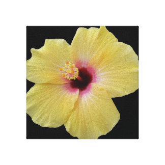 Yellow Hibiscus Flower on Wrapped Canvas