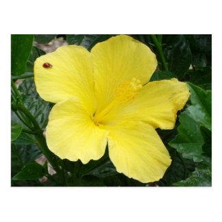 Yellow Hibiscus Flower Postcard