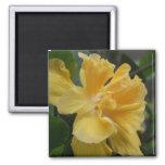 Yellow Hibiscus magnet