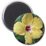 Yellow Hibiscus Magnets