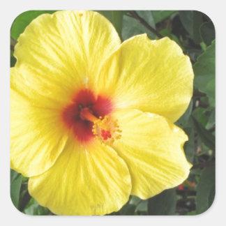 Yellow Hibiscus Plant Art Items Square Sticker