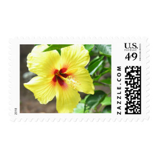 Yellow Hibiscus Stamps