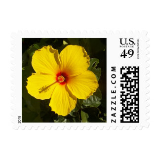 Yellow Hibiscus Postage Stamp