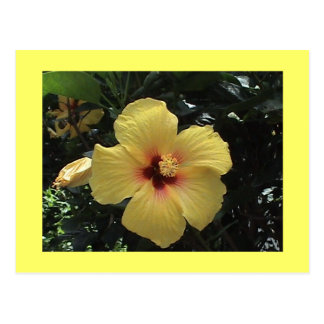 Yellow Hibiscus Postcard
