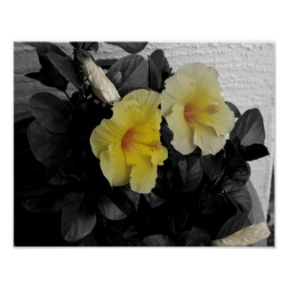 Yellow Hibiscus selective color photo Poster