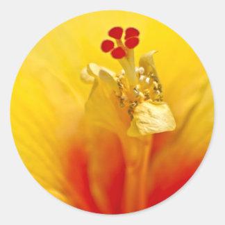 Yellow Hibiscus Sticker