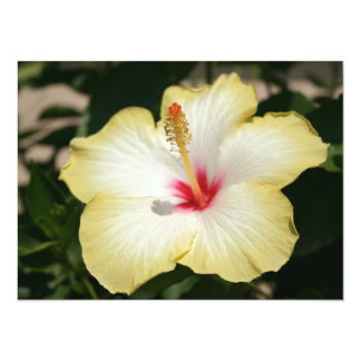 Yellow Hibiscus With Garden Background Card