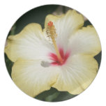 Yellow Hibiscus With Garden Background Party Plates