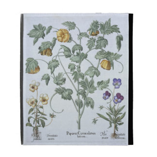 Yellow Horned Poppy, from the 'Hortus Eystettensis iPad Folio Covers