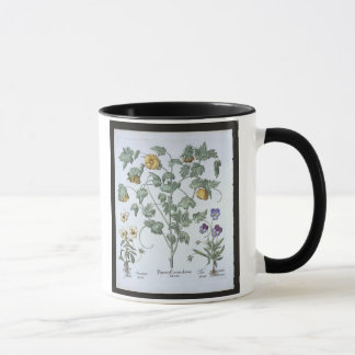 Yellow Horned Poppy, from the 'Hortus Eystettensis Mug