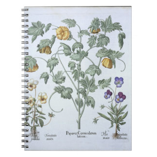 Yellow Horned Poppy, from the 'Hortus Eystettensis Spiral Note Book