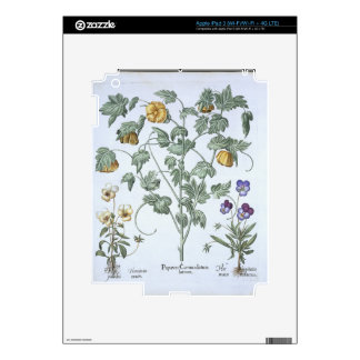 Yellow Horned Poppy, from the 'Hortus Eystettensis Skins For iPad 3