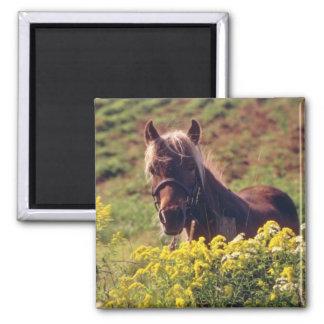 yellow Horse, Ottawa Valley flowers Fridge Magnet
