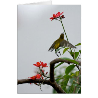 Yellow Hummingbird Card