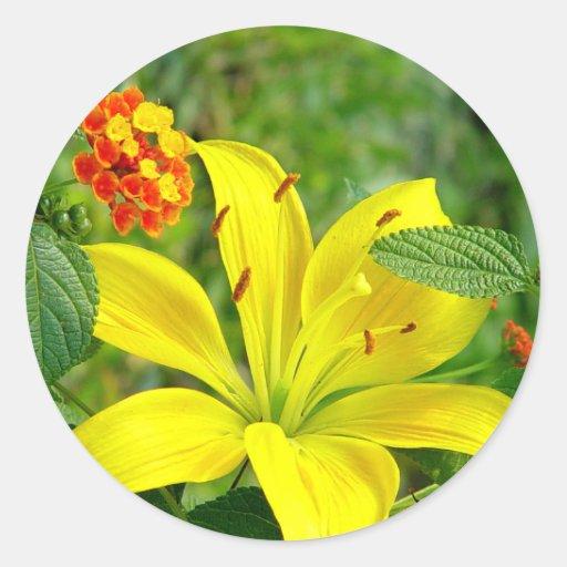 Yellow Hybrid Lilly Sticker