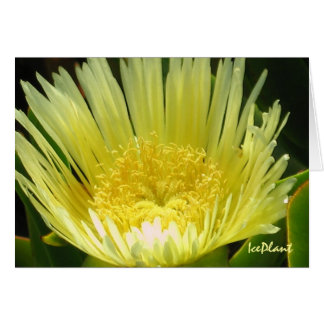 Yellow Ice Plant Card