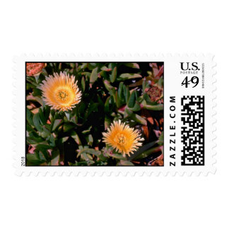 Yellow Ice Plant flowers Postage Stamp
