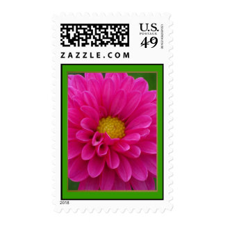 Yellow in Pink Dalia Flower Postage