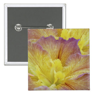 Yellow iris and its meaning pins