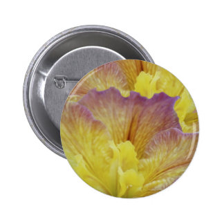 Yellow iris and its meaning buttons