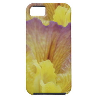 Yellow iris and its meaning iPhone 5 covers