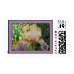 Yellow Iris ~ Border Postage Stamp