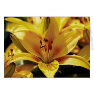 Yellow iris card